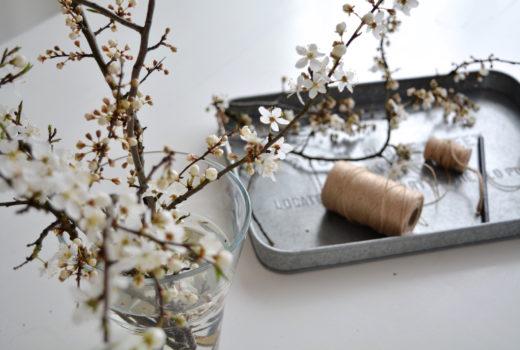 pierwszy powiew wiosny, wiosna, przedwiośnie, kwiaty, kwitnące gałązki
