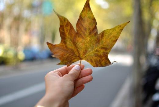 5 zachwytów, przyjemności, spacer, jesienny spacer, gotowanie, książki na jesień, coffee break german, spacer, lili, krakowskie planty, kolorowa jesień