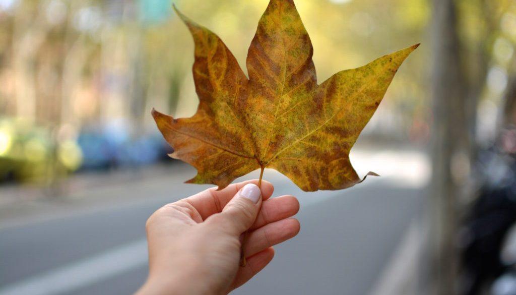 5 zachwytów września blog stabrawa 3